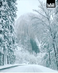 This drive through the snow-covered Yosemite National Park is absolutely breathtaking 😍❄️: LAD  BIBLE This drive through the snow-covered Yosemite National Park is absolutely breathtaking 😍❄️