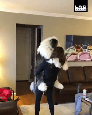 Dank, Bible, and Never: LAD  BIBLE This gigantic dog never gets too big for a hug 😂😂