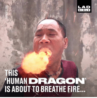 Dank, Fire, and Bible: LAD  BIBLE  THIS  HUMAN DRAGON  IS ABOUT TO BREATHE FIRE 'What's your dream job?'  Dragon 🐉🔥