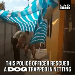 Dank, Police, and Bible: LAD  BIBLE  THIS POLICE OFFICER RESCUED  ADOG TRAPPED IN NETTING The dog couldn't help but show his gratitude after being rescued by the officer... 👏👏