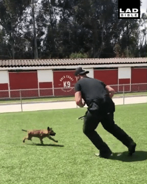 This trainee K9 can already take down a fully grown man 😂😮: LAD  BIBLE This trainee K9 can already take down a fully grown man 😂😮