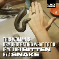 Dank, Bible, and Snake: LAD  BIBLE  THIS WOMANIS  DEMONSTRATING WHAT TO DO  IF YOU GETBITTEN  BYASNAKE Who'd have thought that vodka would repel a snake bite... 😱🐍  Snake Discovery LLC