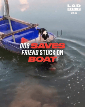 That's what friends are for! 🐶🙌: LAD  BIBLE  VIRAL  DOGSAVES  FRIEND STUCK ON  BOAT  [NEWSFLARE] That's what friends are for! 🐶🙌