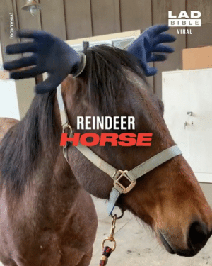 How to turn a horse into a reindeer in one easy step 😂🦌: LAD  BIBLE  VIRAL  REINDEER  HORSE  [VIRALHOG] How to turn a horse into a reindeer in one easy step 😂🦌