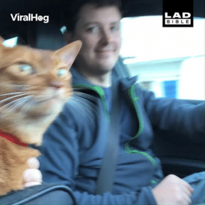 Dank, Bible, and Happy: LAD  BIBLE  ViralHog If you're happy and you know it say 'meow'... 😂🐱