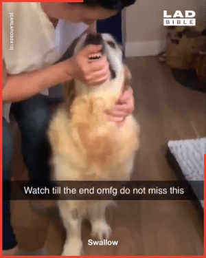 Dank, Bible, and Tablets: LAD  BIBLE  Watch till the end omfg do not miss this  Swallow  [CARLAROSSX12] We all hate taking tablets as much as this dog 😖😂