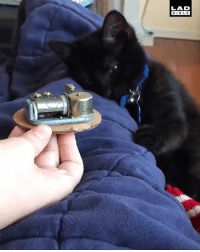 Dank, Go to Sleep, and Love: LAD  BIBLE 'When Osiris was a baby he used to love this little music box and even now 8 months later he still likes for me to play music like this when we go to sleep at night' 🐱😴😍