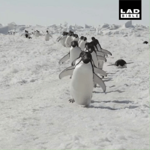 Dank, Food, and Work: LAD  BIBLE When you hear there's free food being handed out at work... 🐧😂