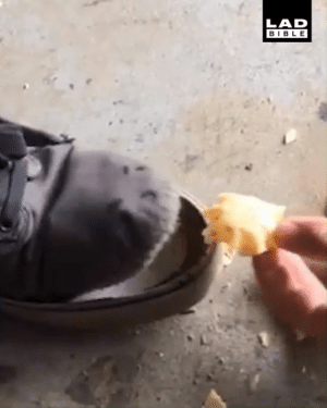 Dank, Hungry, and Shoes: LAD  BIBLE When your old shoes start to get hungry... 😂😂