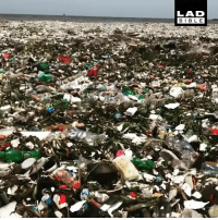 Dank, Bible, and Dominican: LAD  BIBLE You won't believe the shoreline in the Dominican Republic right now... This is shocking 😱😩  Parley for the Oceans
