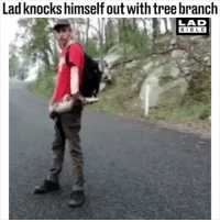 Memes, Bible, and Tree: Lad knocks himself out with tree branch  LAD  BIBLE Tag a friend who would do this 😂😂