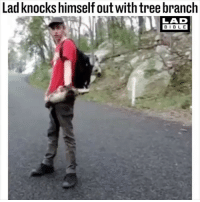 @ladbible is the fucking best: Lad knocks himself out withtree branch  LAD  BIBL E @ladbible is the fucking best