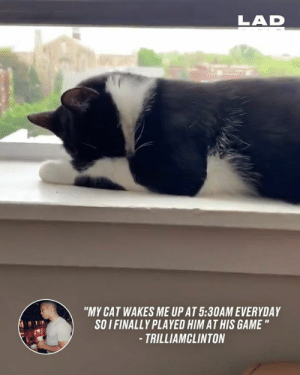 "The cat wanted to play games, the owner was more than happy to play too 🙊😺: LAD  ""MY CAT WAKES ME UP AT 5:30AM EVERYDAY  SOI FINALLY PLAYED HIM AT HIS GAME ""  -TRILLIAMCLINTON The cat wanted to play games, the owner was more than happy to play too 🙊😺"