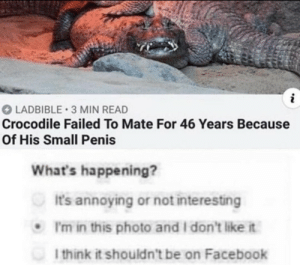 I feel offended and i want to see the maneger by hh3a3 MORE MEMES: LADBIBLE 3 MIN READ  Crocodile Failed To Mate For 46 Years Because  Of His Small Penis  What's happening?  It's annoying or not interesting  I'm in this photo and I don't like it  I think it shouldn't be on Facebook I feel offended and i want to see the maneger by hh3a3 MORE MEMES