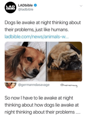 This is to sad via /r/memes https://ift.tt/2MTSwOX: LADbible  LAD  BIBLE@ladbible  Dogs lie awake at night thinking about  their problems, just like humans.  ladbible.com/news/animals-w...  @germanndasavage  @mememang  So now I have to lie awake at night  thinking about how dogs lie awake at  night thinking about their problems.  > This is to sad via /r/memes https://ift.tt/2MTSwOX