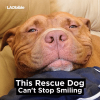 He can't stop smiling...: LADbible  This Rescue Dog  Can't Stop Smiling He can't stop smiling...