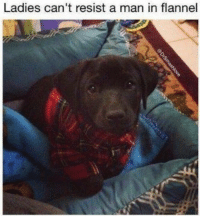 Man, Flannel, and  Cant Resist: Ladies can't resist a man in flannel