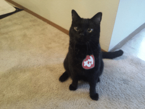 lady-of-rohan: awwww-cute:  Just trying out his new costume  this is the most brilliant thing : lady-of-rohan: awwww-cute:  Just trying out his new costume  this is the most brilliant thing