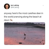 Deer, Memes, and Twitter: lan Laking  @lHLaking  anyway here's the most carefree deer in  the world prancing along the beach at  dawn tag someone to brighten their Monday 😍 (@ihlaking on Twitter)