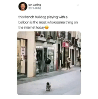 send help i'm crying (@ihlaking on Twitter): lan Laking  @lHLaking  this french bulldog playing with a  balloon is the most wholesome thing on  the internet today  SALD  40  во send help i'm crying (@ihlaking on Twitter)
