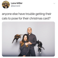 Cats, Christmas, and Lana: Lana Miller  @lannmil  anyone else have trouble getting their  cats to pose for their christmas card?