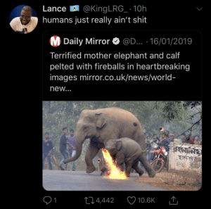 News, Shit, and The Worst: LanceA @King LRG_ 10h  humans just really ain't shit  M Daily Mirror  @D... 16/01/2019  Terrified mother elephant and calf  pelted with fireballs in heartbreaking  images mirror.co.uk/news/world-  new...  24,442  10.6K The worst species