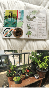 coffeebeanbean: I love documenting my plants in my bullet journal! 🌿: LANDING 000  plant  collection.  . i lov e 'succulents  Succulent  Strong  EARTH D  named oster the  und of ades  5. 22.17  . each hare diferert  peanalities and have  Il AM 3PM  aloe wra  ACKSONVILLE  LANDING  . wants sunligt td  alse hates sunligh+?  ene of the suuts  cob stole fro the  beaufu fom  cute  r Chil  Chil  S. 22  brohen but ative  ing with him  ation.of  the  sutculen+  hus him when  eybite hinm coffeebeanbean: I love documenting my plants in my bullet journal! 🌿