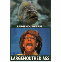 Ass, Memes, and 🤖: LARGEMOUTH BASS  LARGEMOUTHED ASS HAHAHA! Pc: @the_typical_liberal