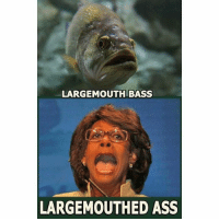 America, Ass, and Facebook: LARGEMOUTH BASS  LARGEMOUTHED ASS Maxine Waters is the biggest ass on Capitol Hill besides Nancy Pelosi. largemouth largemouthbass bass maxine trumpmemes liberals libbys democraps liberallogic liberal maga conservative constitution presidenttrump resist thetypicalliberal typicalliberal merica america stupiddemocrats donaldtrump trump2016 patriot trump yeeyee presidentdonaldtrump draintheswamp makeamericagreatagain trumptrain triggered CHECK OUT MY WEBSITE AND STORE!🌐 thetypicalliberal.net-store 🥇Join our closed group on Facebook. For top fans only: Right Wing Savages🥇 Add me on Snapchat and get to know me. Don't be a stranger: thetypicallibby Partners: @theunapologeticpatriot 🇺🇸 @too_savage_for_democrats 🐍 @thelastgreatstand 🇺🇸 @always.right 🐘 @keepamerica.usa ☠️ @republicangirlapparel 🎀 @drunkenrepublican 🍺 TURN ON POST NOTIFICATIONS! Make sure to check out our joint Facebook - Right Wing Savages Joint Instagram - @rightwingsavages