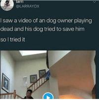 Playing Dead: larri  @LARRAYOX  I saw a video of an dog owner playing  dead and his dog tried to save him  so l tried it
