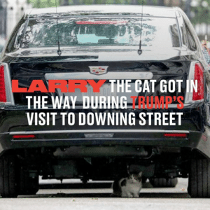Larry The Cat had a protest of his own when he stopped The President from leaving Downing Street. Of all the protests that have taken place since Trump's arrival, Larry's is the one that worked 🙈😼: LARRYTHE CAT GOT IN  THE WAY DURING RUMP'S  VISIT TO DOWNING STREET Larry The Cat had a protest of his own when he stopped The President from leaving Downing Street. Of all the protests that have taken place since Trump's arrival, Larry's is the one that worked 🙈😼