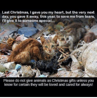 Cats, Memes, and Vegan: Last Christmas, I gave you my heart, but the very next  day, you gave it away, this year, to save me from tears,  I'll give it to someone special...  Please do not give animals as Christmas gifts unless you  know for certain they will be loved and cared for aways! AND FOR CHRIST'S SAKE PLEASE ADOPT AND DON'T SHOP! Veganism Vegan AnimalRights Meat Milk Dairy Eggs Cheese Ethics Morals Compassion Justice GoldenRule Spiritual Spirituality Pets Christmas Winter Snow Xmas Santa Reindeer Cats Dogs