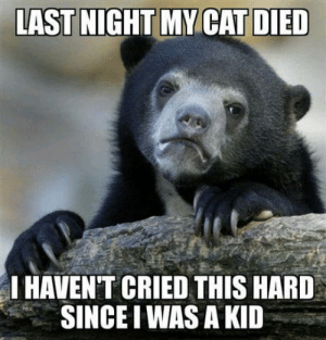 Yo, Cat, and Last Night: LAST NIGHT MY CAT DIED  IHAVEN'T CRIED THIS HARD  SINCE IWAS A KID Im a 28 yo guy