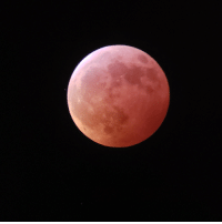 Moon, Wolf, and Blood: Last night's blood wolf moon!
