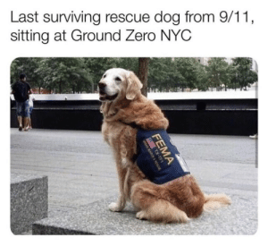 ily: Last surviving rescue dog from 9/11  sitting at Ground Zero NYC ily