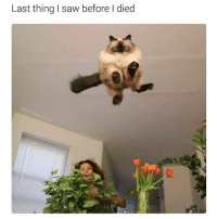@hilarious.ted is my favourite page about animal memes!: Last thing I saw before died @hilarious.ted is my favourite page about animal memes!
