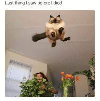 Memes, Saw, and Ted: Last thing I saw before I died  @hilarious ted What a horrible way to go. (@hilarious.ted)
