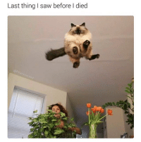 Funny Animals, Memes, and Ted: Last thing saw before l died Follow @hilarious.ted for mor funny animal memes.