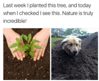 "Good, Http, and Nature: Last week I planted this tree, and today  when I checked I see this. Nature is truly  incredible! <p>Good Boy Sprout via /r/wholesomememes <a href=""http://ift.tt/2jLxXCY"">http://ift.tt/2jLxXCY</a></p>"