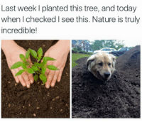 Dogs, Life, and Nature: Last week l planted this tree, and today  when checked l see this. Nature is truly  incredible! Life finds a way