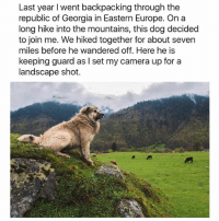 "Bless Up, Blessed, and Butt: Last year I went backpacking through the  republic of Georgia in Eastern Europe. On a  long hike into the mountains, this dog decided  to join me. We hiked together for about seven  miles before he wandered off. Here he is  keeping guard as I set my camera up for a  landscape shot. On this blessed day I ask God to ease your burden, whatever that burden might be. If you are struggling I ask God to make things easy for you. If you are depressed I ask God to light your way. If you are hungry I ask God to feed you and to move those around you to feed you - it is the responsibility of those living in comfort to give to those who are not. I hate asking for favors but do me one favor today. Identify a family member from whom time or distance or an argument of some type or hardship long ago has caused separation. Reach out to them and let them know you love them. Be the better person and cure severed familial bonds with love. Aight? You can do it. My lil homegirl, her mom is the most wretched human on earth 😂. Every day she say something new to annoy her daughter. A week ago she said ""your butt is flat"" out of nowhere (and her butt ain't een flat lol!) And that girl still take care of her mama day in and day out. It's not easy but it's not really a test if it's easy, ya get me! More life more happiness more faith - whatever you wanted to accomplish in 2017, you got one-third of the year left - MAKE IT COUNT ❤️ Bless up 🌙 (📷: Reddit u-lil-rap)"