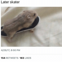 Girl Memes, Boy, and Likes: Later skater  4/29/17 8:00 PM  154  RETWEETS 183  LIKES he was a sk8r boy