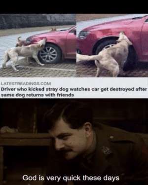 My next attempt at this meme format: LATESTREADINGS.COM  Driver who kicked stray dog watches car get destroyed after  same dog returns with friends  God is very quick these days My next attempt at this meme format