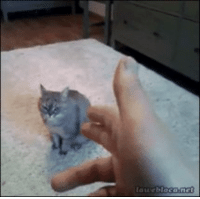 """funny Cat: """"Do I really have to do this?"""" Inner cat: """"He's the one that feeds you"""": lauebiocame funny Cat: """"Do I really have to do this?"""" Inner cat: """"He's the one that feeds you"""""""