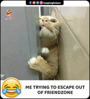 Friendzone, Indianpeoplefacebook, and Laughing: /LaughingColours  f  LAUGHING  Celours  ME TRYING TO ESCAPE OUT  OF FRIENDZONE