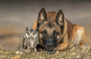 Beautiful, Friends, and Tumblr: laughingsquid:  Stunning Photos of a Beautiful Shepherd Dog Posing Happily With His Owl Friends