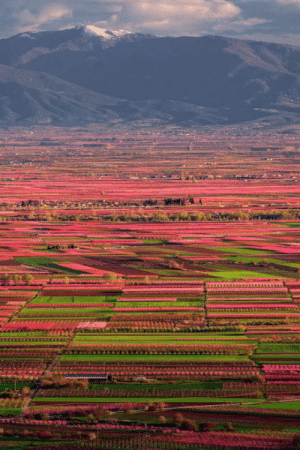 Club, Tumblr, and Blog: laughoutloud-club:  Peaches on Thessalian plain in Greece, by Alexandros Malapetsas