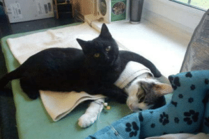 Club, Tumblr, and Blog: laughoutloud-club:  This cat is a nurse in a vet hospital in Poland. It gives sick patients comfort.