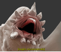 Have a little laugh.: laughs microscopically Have a little laugh.