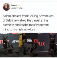 Memes, Hell, and 🤖: laura  @daisyrdley  Salem (the cat from Chilling Adventures  of Sabrina) walked the carpet at the  premiere and it's the most important  thing to me right now bye  LIX Post 1449: y the hELL havent u folloWed @kalesaladanimals yet